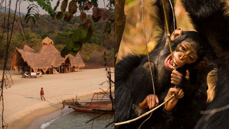 the most expensive trips safari in the world