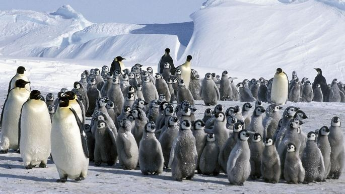 Colony of penguins - the most expensive cruise