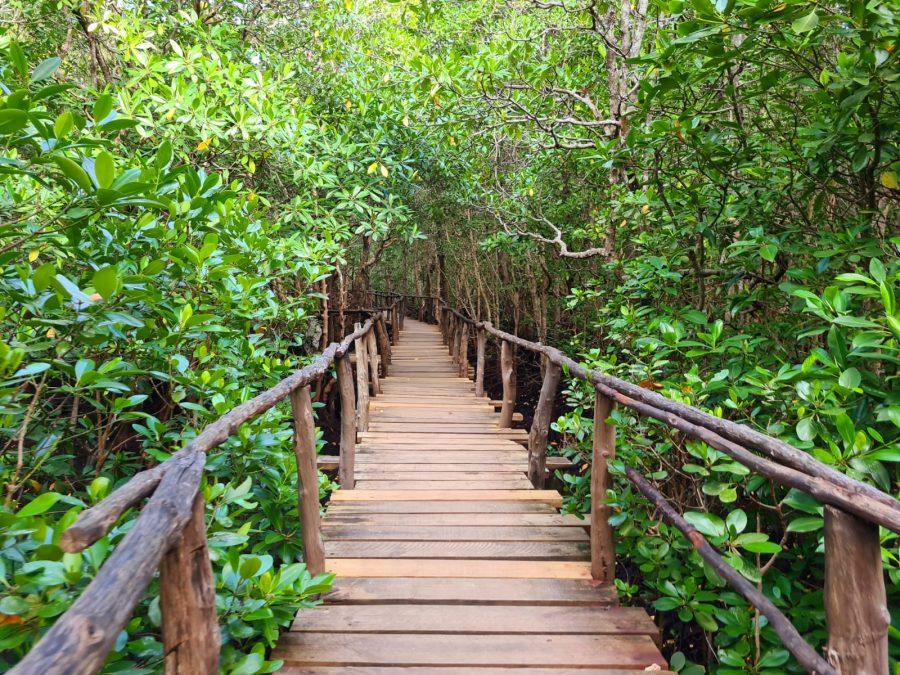 Jozani-forest-zanzibar travel guide 2021